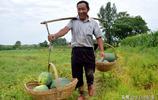品牌沙瓤西瓜商超賣1.2元,地頭僅3毛,瓜農豐收卻稱明年不想再種