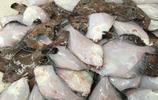 休漁期內這些味道鮮美的海鮮上市,品種不少價格不高 蠣蝦只要12元一斤夠便宜的吧