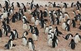 旅行時光八:南極洲,我們的夢寐之地