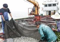 岱山縣啟動大黃魚增殖放流工作