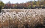 渾河的秋天來了