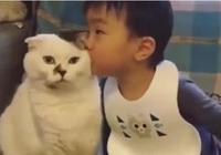 """萌娃偷親小奶貓,奶貓舉動被贊""""禮尚往來""""!網友:它男的女的?"""