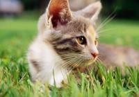 貓得了耳蟎?該怎麼辦?|一篇文章教你對付貓耳蟎
