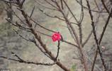 生活中從不缺少美,只是缺少發現美的眼睛。快看初春的景色有多美