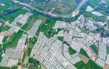 四川彭州:航拍西瓜大棚 美麗鄉村畫卷