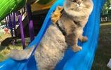 別人家的貓只會玩紙巾,而這貓去哪都被路人搶著合影