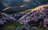 風光圖集:塞外之春