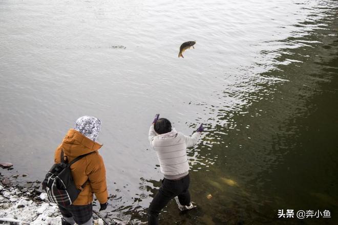 """民間放生千斤活魚,市民說""""活不了"""",你怎麼看?"""