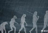 為什麼《三體》中的地球人直到宇宙末日都沒有見到過一個實體外星人?