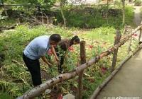 華州警方剷除罌粟