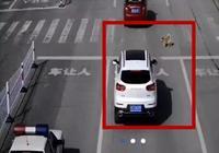 #淨網2019#斑馬線前未禮讓狗被罰款扣分?交警:圖被裁過