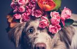 攝影 | 我們捕捉狗狗的表情(24張照片)