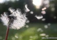 李清照詩詞中的相思,真情之美,莫過於如此