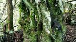 山高林密樹樁子長得也奇怪特別,很多買家喜歡,能賣個好價錢,挺不錯的!