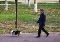 老人遛狗摔倒,無人敢扶,因為忠犬守護不讓人靠近