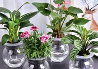 植物盆栽——天然的空氣淨化器