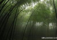 江邊鳥對聯1758:綠竹舞晨風