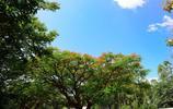 風景圖集:非洲烏干達