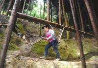 深山女背夫:身懷平衡木絕技 日背千斤木料如履平地
