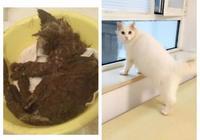 你收養的田園貓,與最初進門時相比有了哪些變化?