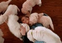 """如果你家狗狗有這""""6種行為"""",那麼它承認你這個主人"""