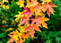 秋天一定要住北平,北平之秋就是天堂,也許比天堂更繁榮一點呢