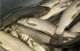 秋季釣魚技巧,釣魚達人必看