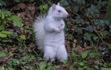 罕見的白化松鼠