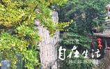 重慶洪崖洞,依山就勢,美景如畫