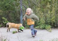 人用了上萬年把狗馴化,前蘇聯這位科學家只用60年就馴化了狐狸