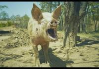 豬年說豬!西遊記裡面豬八戒的能力是不是被低估了?唐僧為什麼喜歡袒護八戒?