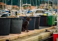 狗對主人是絕對忠誠的嗎?