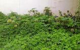 我家的小菜園,園子雖小,品種齊全,看看有你認識的嗎?