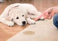 """狗狗最怕什麼樣的""""懲罰""""?5個有效的法子,讓你家狗子不再犯錯"""