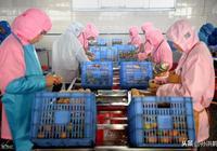 農村想投資十萬元做食品廠,這種創業行嗎?
