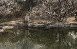 陽春三月北京植物園美景
