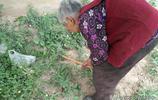 農村78歲大媽與老伴相依為命,撿破爛挖野菜自食其力,背後有故事