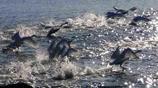 威海天鵝湖之遊,景色優美,風景如畫,遊客眾多!