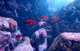 潛水勝地塞班島