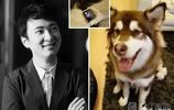 """神祕狗叫板王思聰愛犬:兩個iwatch算什麼?狗生贏家王可可地位被撼動!這才是真正的""""土""""豪狗!"""