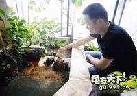 """在家陽臺專門設計一個池子打造""""龜樂園"""""""