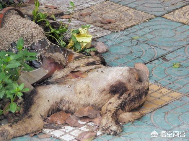 家裡有兩個人一條狗,中午吃飯把剩的給狗吃了,晚上狗死了人沒事,這是為什麼?