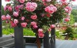 庭院種上爬藤花卉,輕鬆變成空中花園,還不惹蟲