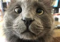 鏟屎官領養了只喵星人,回家後才發現這貓居然有當貼身保鏢的天賦
