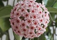 最耐陰的開花植物 這些花在封閉陽臺也能輕易開爆盆
