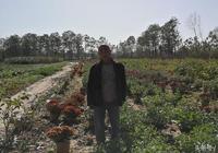種植玉米不賺錢,農村人想新鮮主意,一畝地掙了4000元!