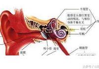 海之聲聽力提醒您:耳朵的外耳道疼是怎麼了?
