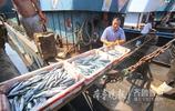 大鮁魚來嘍!煙臺碼頭海魚裝箱被運上岸