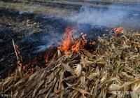 農村燒秸杆是空氣汙染源?禁燒秸杆帶來的弊端已出現!如何取捨?