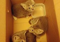 貓媽媽為給3只小貓找個好人家,考驗小夥2個月後,終於安心的走了